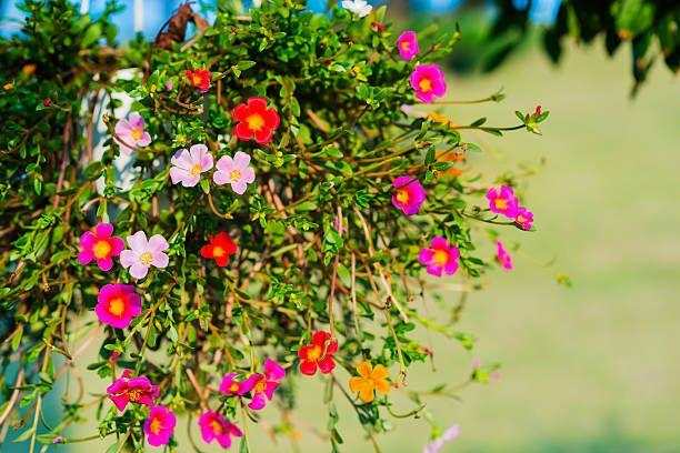 """<p>Now that the hottest days of the growing season are upon us, you may think it's time to put away your planting trowel and gardening gloves. Not exactly! You actually can plant many different edibles and ornamentals in July to squeeze out a second harvest or brighten up faded flower beds, containers and <a href=""""https://www.housebeautiful.com/lifestyle/g30109429/planter-box-ideas/"""" target=""""_blank"""">planter boxes</a>. Many types of edibles can be planted from seed even now, as long as you have enough time left before a frost. Check with your local university coop extension service (find yours <a href=""""https://nifa.usda.gov/land-grant-colleges-and-universities-partner-website-directory"""" target=""""_blank"""">here</a>) to find the first expected frost date in your area, then count backwards. For example, if your first frost is generally around October 15, and the seed package says the plant takes """"60 days to maturity,"""" you're still in good shape! For flowers, it's a great time to head to the nursery to pick up a few new ones to refresh beds that no longer look their best. And though it goes without saying, keep everything watered if you're in a dry spell! </p><p>Typically, here's what you can plant in July:</p>"""