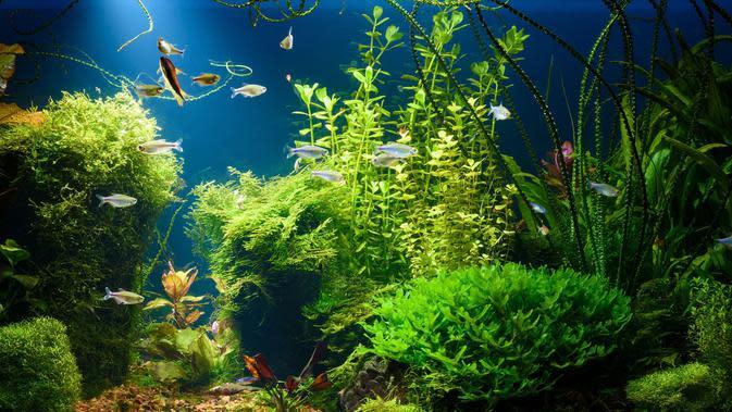 Setelah Ikan Cupang, Kini Giliran Aquascape yang Naik Daun