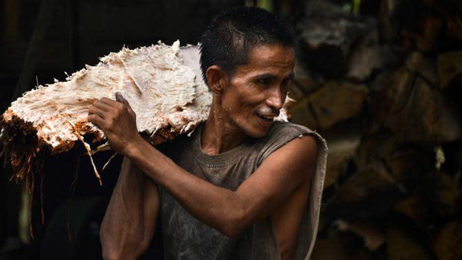Gambar pada 9 Februari 2020 menunjukkan pekerja membawa potongan pohon sagu untuk diolah menjadi tepung di sebuah desa di Meulaboh, provinsi Aceh. Berwarna putih agak pucat, tepung ini sering digunakan untuk pembuatan berbagai makanan dan masakan. (CHAIDEER MAHYUDDIN/AFP)