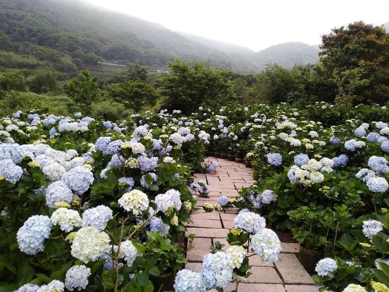 花與樹園藝