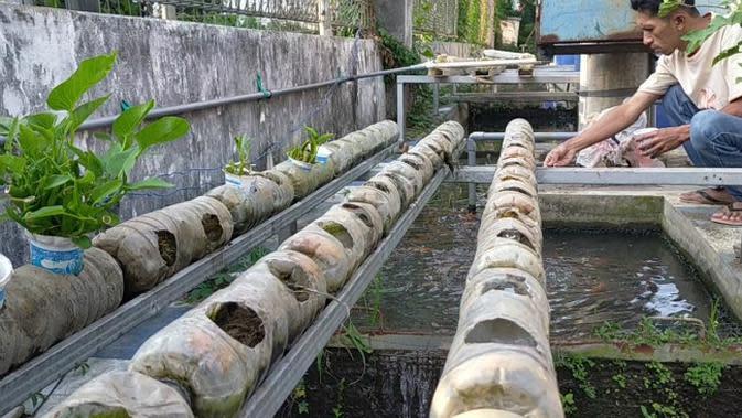 Menjaga Ketahanan Pangan pada Masa Pandemi Covid-19 dengan 'Urban Farming'