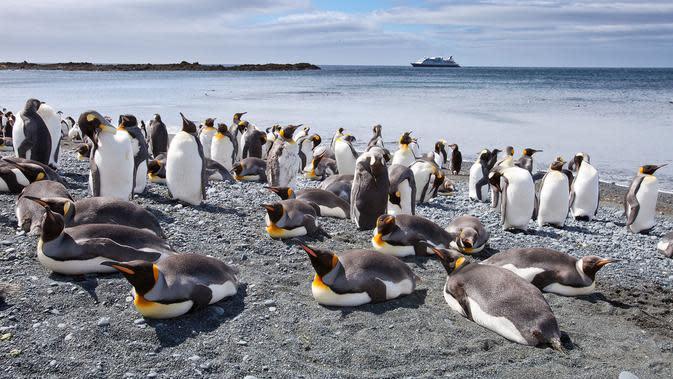 Ilustrasi penguin (AFP)