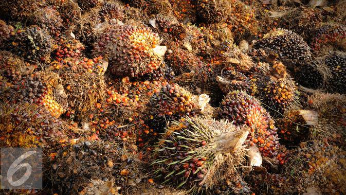 AS Blokir Impor Minyak Sawit dari Perusahaan Besar Malaysia