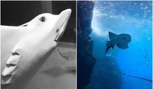 遭控水母斷肢、魟魚自撞玻璃 Xpark館方聲明:絕無虐待