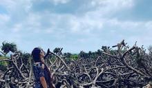 南台灣曬暖陽 峽谷、崩崖及215種海岸植物造就「龍坑秘境」之美