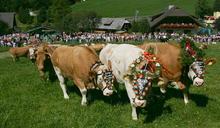 牛年到不能出國沒關係!全世界為牛瘋狂的節慶先收藏起來