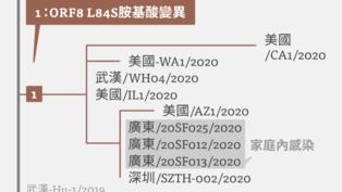 【病毒密碼】2019新冠狀病毒防疫第二階段──封境焦土戰與病毒變異的賽跑