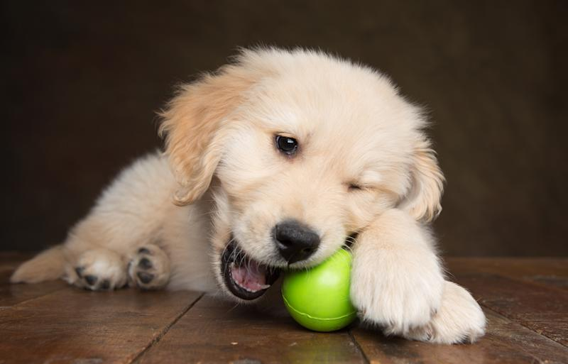 Keep your playful pup and adult dogs busy and mentally stimulated with the Starmark Bob-a-Lot interactive toy (Photo: Getty)