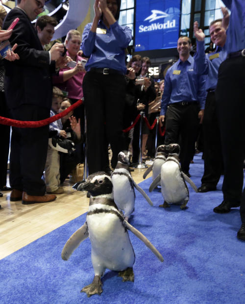 Penguins from SeaWorld are escorted by their handlers on the floor of the New York Stock Exchange during the company's IPO, Friday, April 19, 2013, in New York. The broad Standard & Poor's 500 index opened higher early Friday. (AP Photo/Richard Drew)