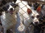 寵物食物銀行-請給浪浪溫飽吧!
