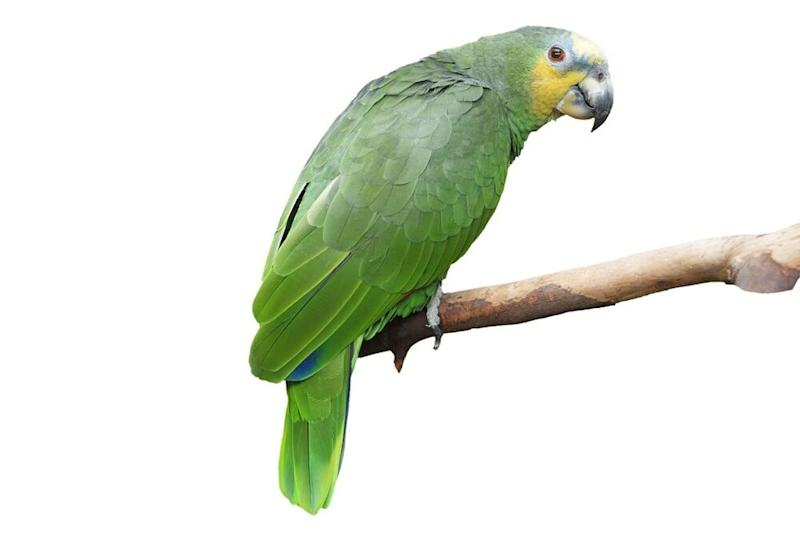 Parrot | Getty Images