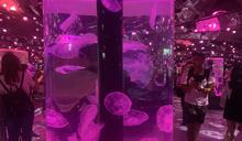 【有影】全台最美水族館開箱!Xpark打造五感沈浸式體驗 帶你穿梭絕美海底世界