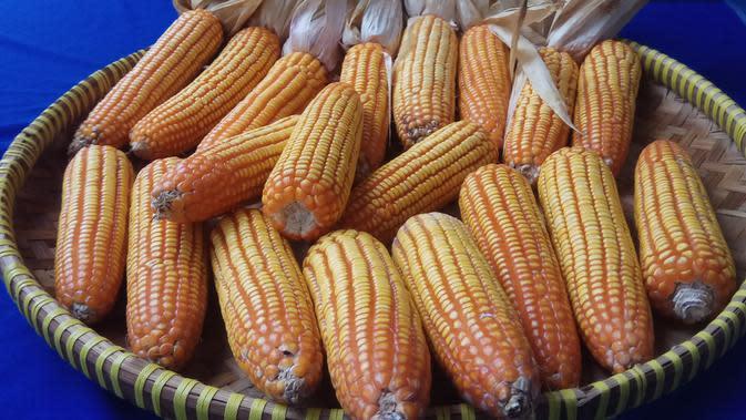 Petani di Kabupaten Tuban Siap Panen Jagung dan Padi