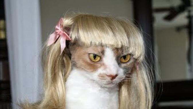 Potret Kucing saat Memakai Wig ini sukses Bikin Gemes (sumber:whydidyouwearthat.com)