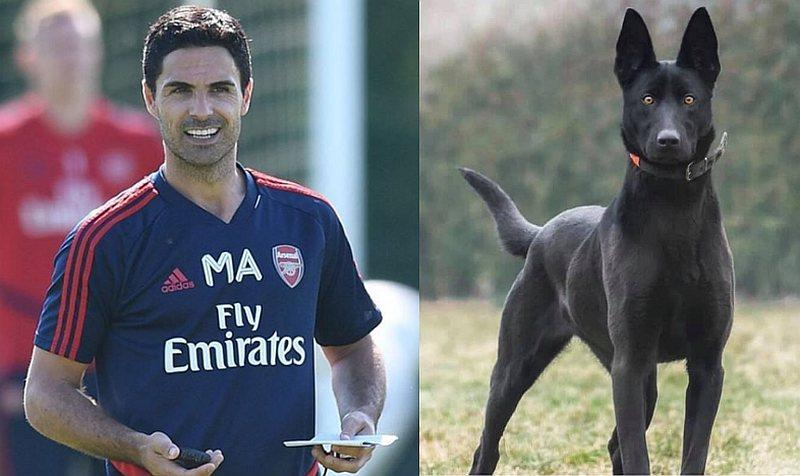 Arsenal boss Mikel Arteta acquired the Dutch Shepherd before the North London sides' FA Cup win on the weekend. — Picture via Instagram/ @mikelarteta & Twitter/@cooldogfacts