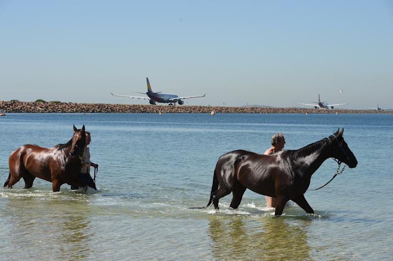 A man takes his horses for a dip to cool off in the water at Kyeemagh in Sydney. Source: AAP Image/Dean Lewins