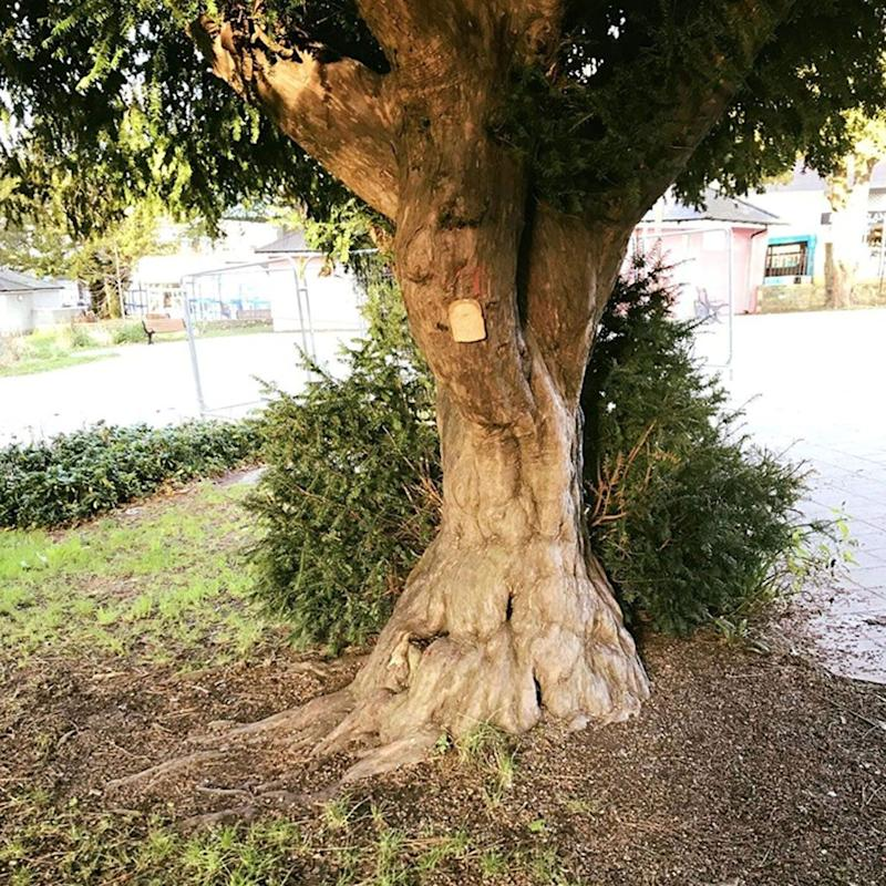 Bread stapled to trees, viral Reddit trend seen in Brisbane