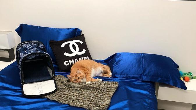 Hotel mewah untuk kucing, Luxe Pet Hotel, Las Vegas, Amerika. (dok. Instagram @luxepethotels/https://www.instagram.com/p/B2-2SR8BQsj//Adhita Diansyavira)