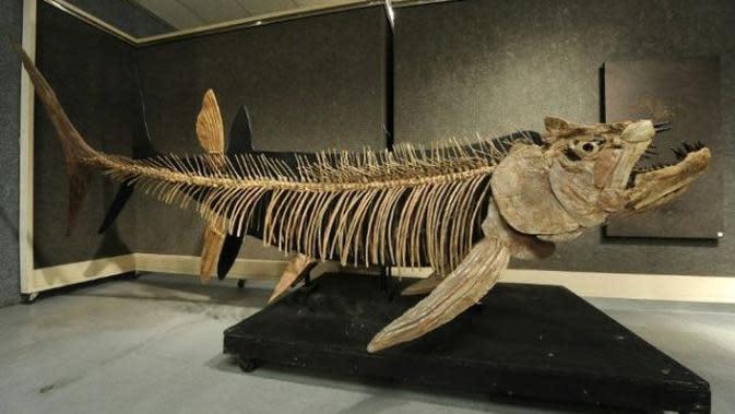 Predator Terbesar dalam Sejarah, Fosil Ikan Berusia 70 Juta Tahun Ditemukan di Argentina