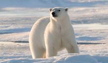 哈利波特的寵物與北極熊