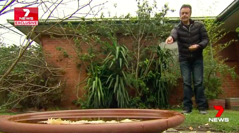 Highett resident Brad Martell has been feeding birds for 20 years at his Melbourne home.