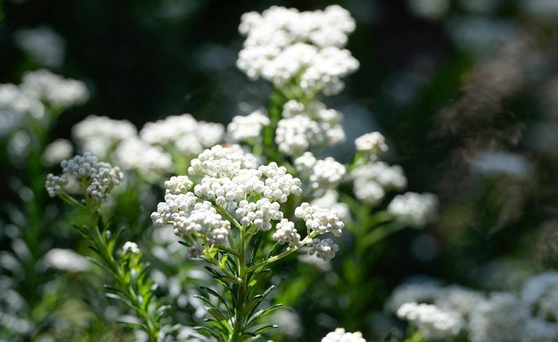 Top 30 varieties to plant this spring