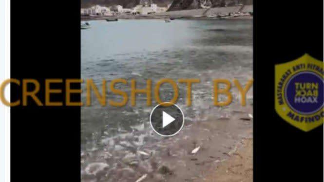 Cek Fakta: Peristiwa Ajaib Ribuan Ikan Datangi Pantai Gaza