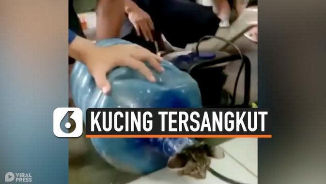 VIDEO: Kasihan, Anak Kucing Tersangkut di Galon Air