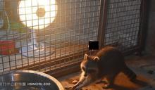 寒流接連來襲 竹動物園讓動物吃飽住暖房