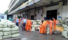 「蕎麥殼靠枕」真「裝蒜」 海關查獲約8公噸走私中國蒜頭