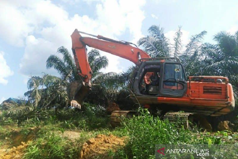 Riau kehilangan Rp107 triliun akibat 1,4 juta hektare sawit ilegal