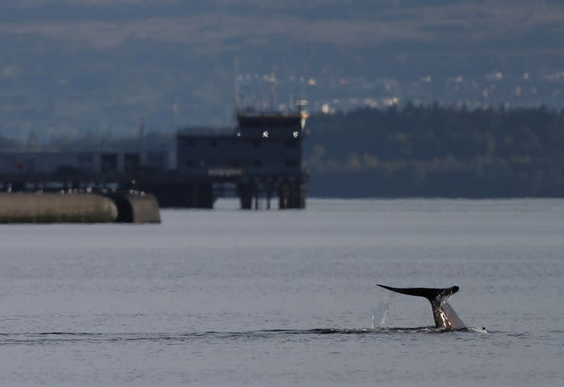 Rescuers race to herd whales away from military exercise in Scotland