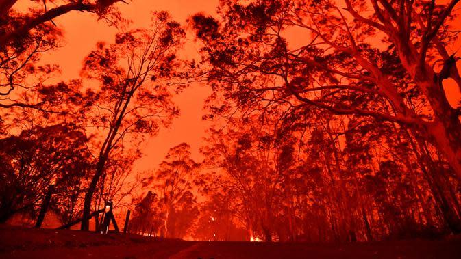 Langit sore bersinar kemerahan akibat kebakaran hutan di daerah sekitar kota Nowra, negara bagian New South Wales, Australia, Selasa (31/12/2019). Akibat kebakaran ini, ribuan wisatawan dan penduduk lokal mengungsi ke wilayah pantai di Australia tenggara. (AFP/Saeed Khan)