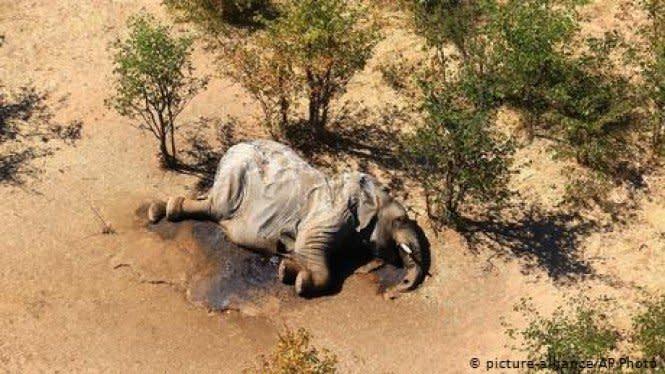 Misteri Kematian Massal Ratusan Gajah di Afrika Akhirnya Terungkap