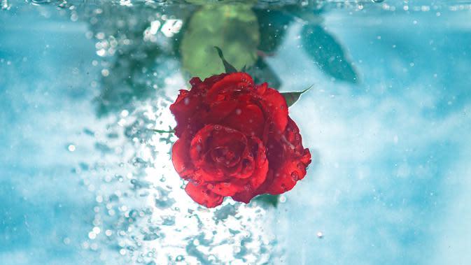 Ilustrasi air mawar (Foto: Unsplash.com/Jamie Street)