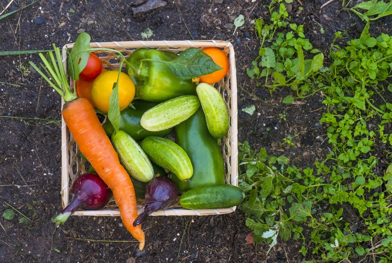 <p>Cucumbers, tomatoes, carrots, and beets are the easiest veggies to grow first. They are as close to foolproof as gardening gets. </p>