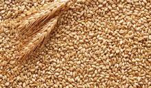 中國曝糧食需求急迫 採購7年來最大量小麥
