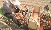 大蒜播種機 拉高效率解決缺工問題