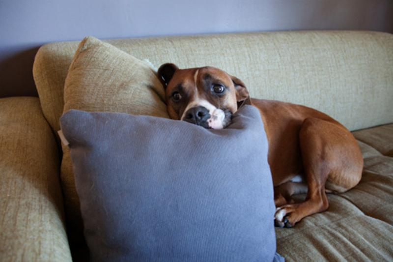 20 to 30 per cent of Australian pets suffer from anxiety