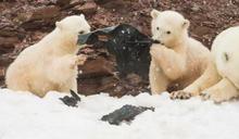 令人心碎!小北極熊「黑塑膠袋當點心」分食 畫面曝光引人鼻酸