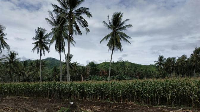 Tujuh Kecamatan di Pasuruan Kekeringan Akibat Musim Kemarau, Mana Saja?