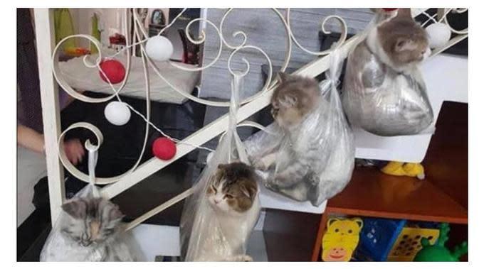 Potret Kucing di Dalam Plastik (Sumber: Twitter//mellykvera/s)