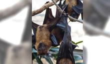 男子出差3個月返家 開門衝出上百隻蝙蝠 網傻眼:吸血鬼?