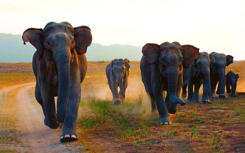 Wild elephants in Jim Corbett National Park, India - getty