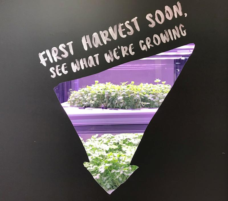 First Harvest tease