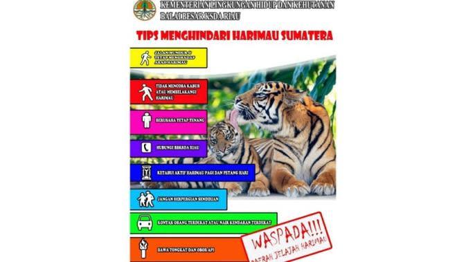 Selebaran yang disebar BBKSDA Riau kepada masyarakat di Kabupaten Kampar tentang harimau sumatra. (Liputan6.com/M Syukur)