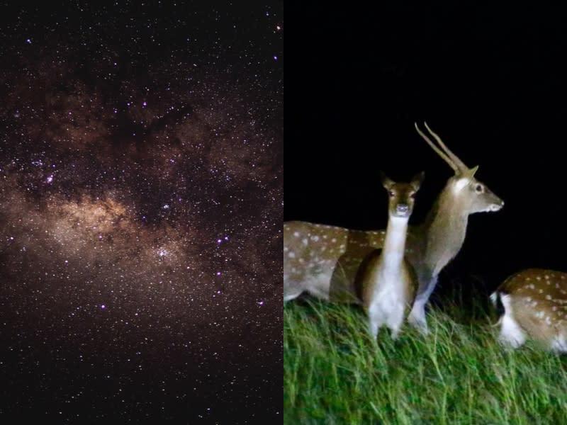 夜訪墾丁秘境 尋找梅花鹿蹤影