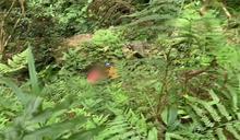 摔落15公尺深山谷 登山女隊員無法動彈