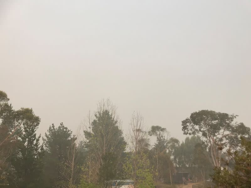Trees stand under a hazy sky in Jindabyne, a township affected by the Dunns Road bushfire, in New South Wales, Australia