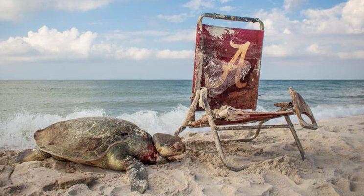 The horrific image shows the sea turtle's neck tethered to the beach chair.
